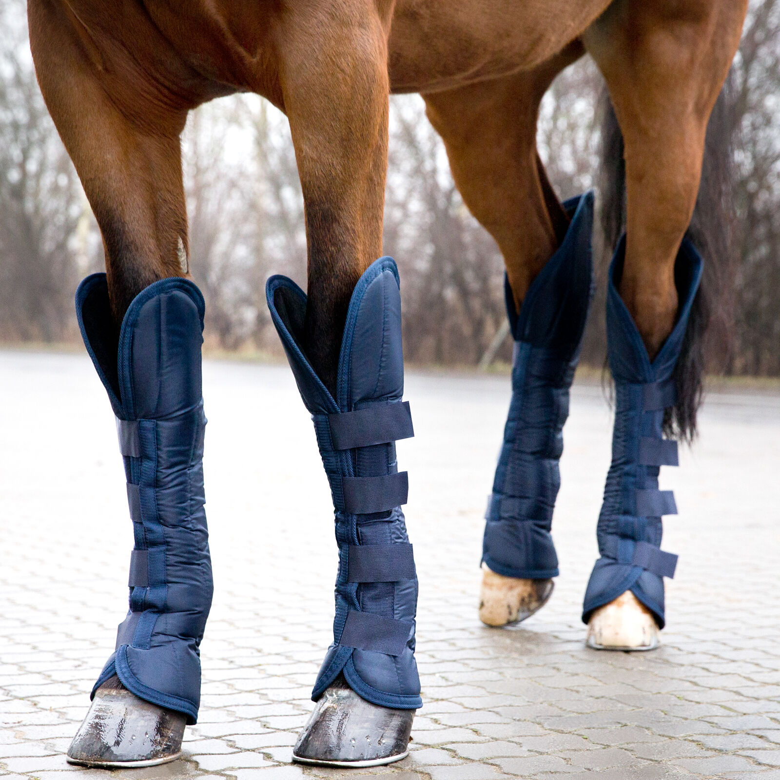 Travel \u0026 Stable Boots | Horze