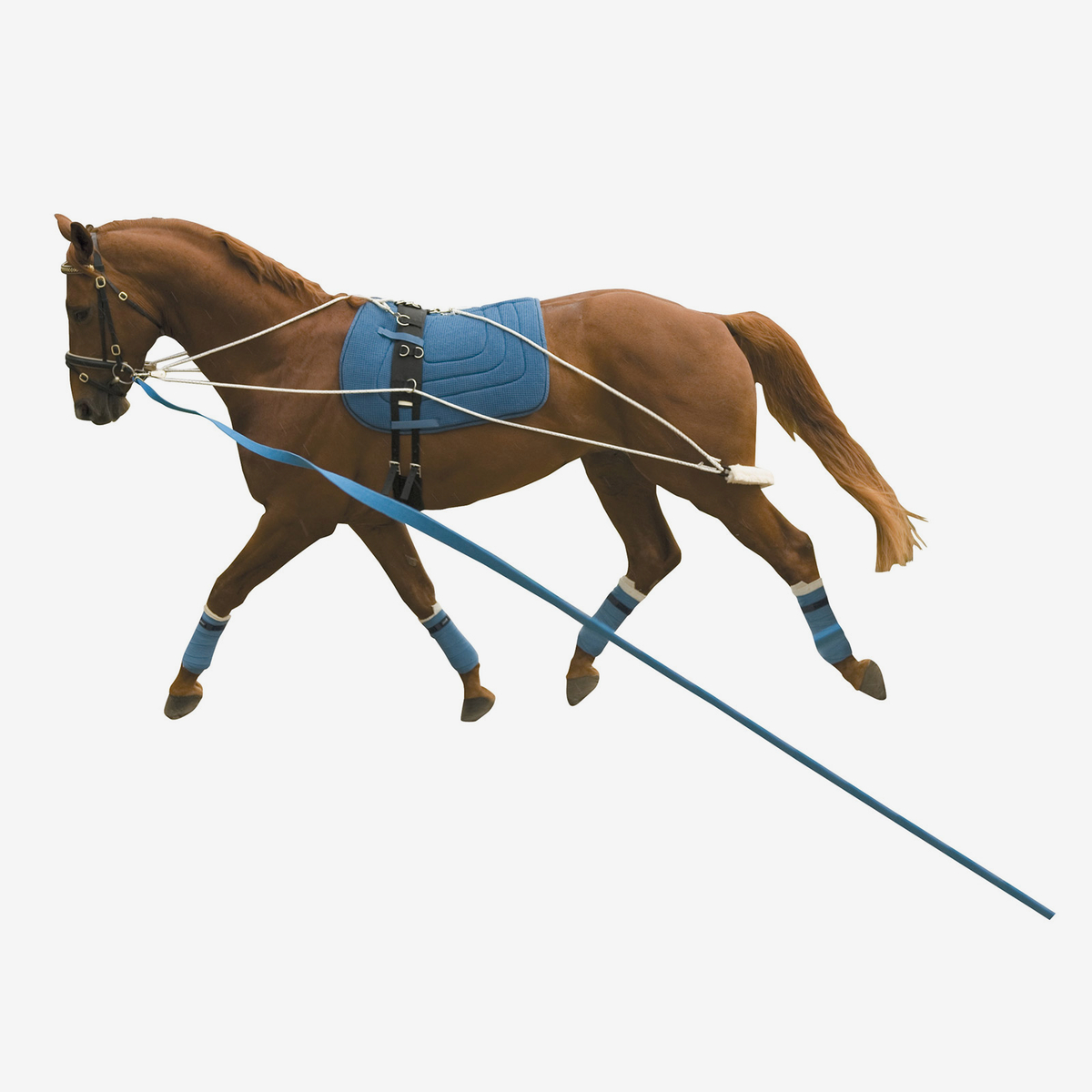 Kincade Lunging Training System Horze