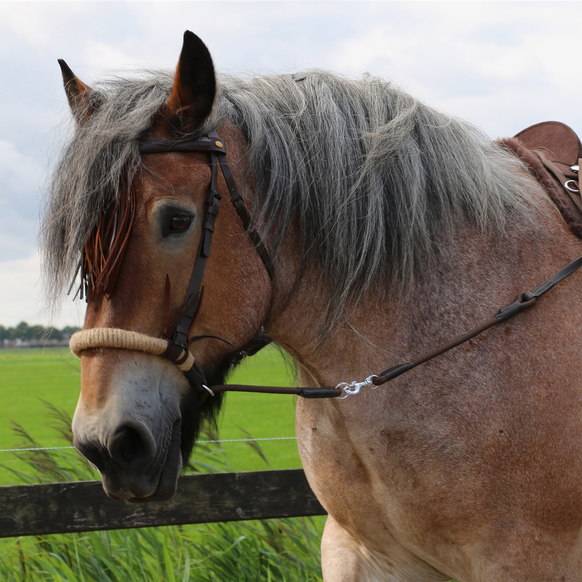 F R A  Tinver Bitless Bridle (System 4) Soft Leather Reins Incl