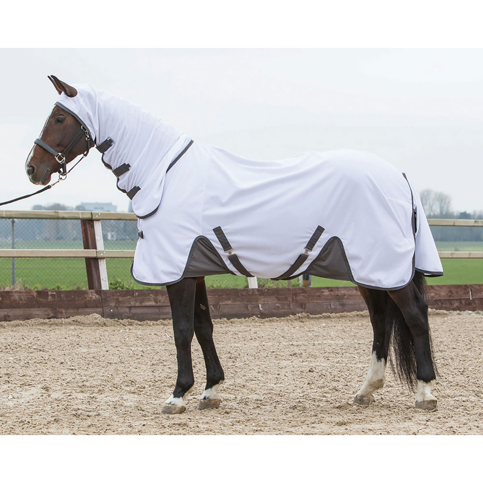 Harry S Horse Fly Protection Rug Mesh