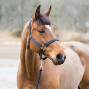 Horze Halter and Lead Set