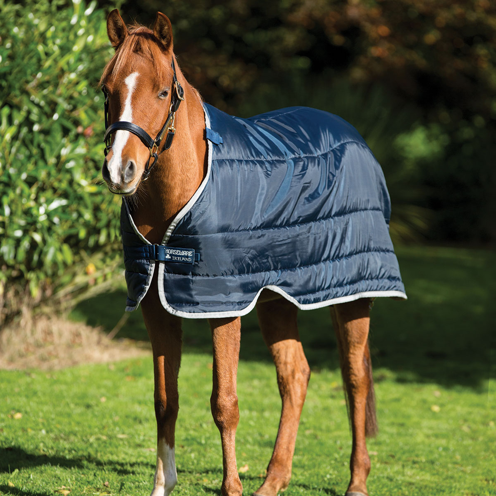 Pony Le Rugs Liners Horze