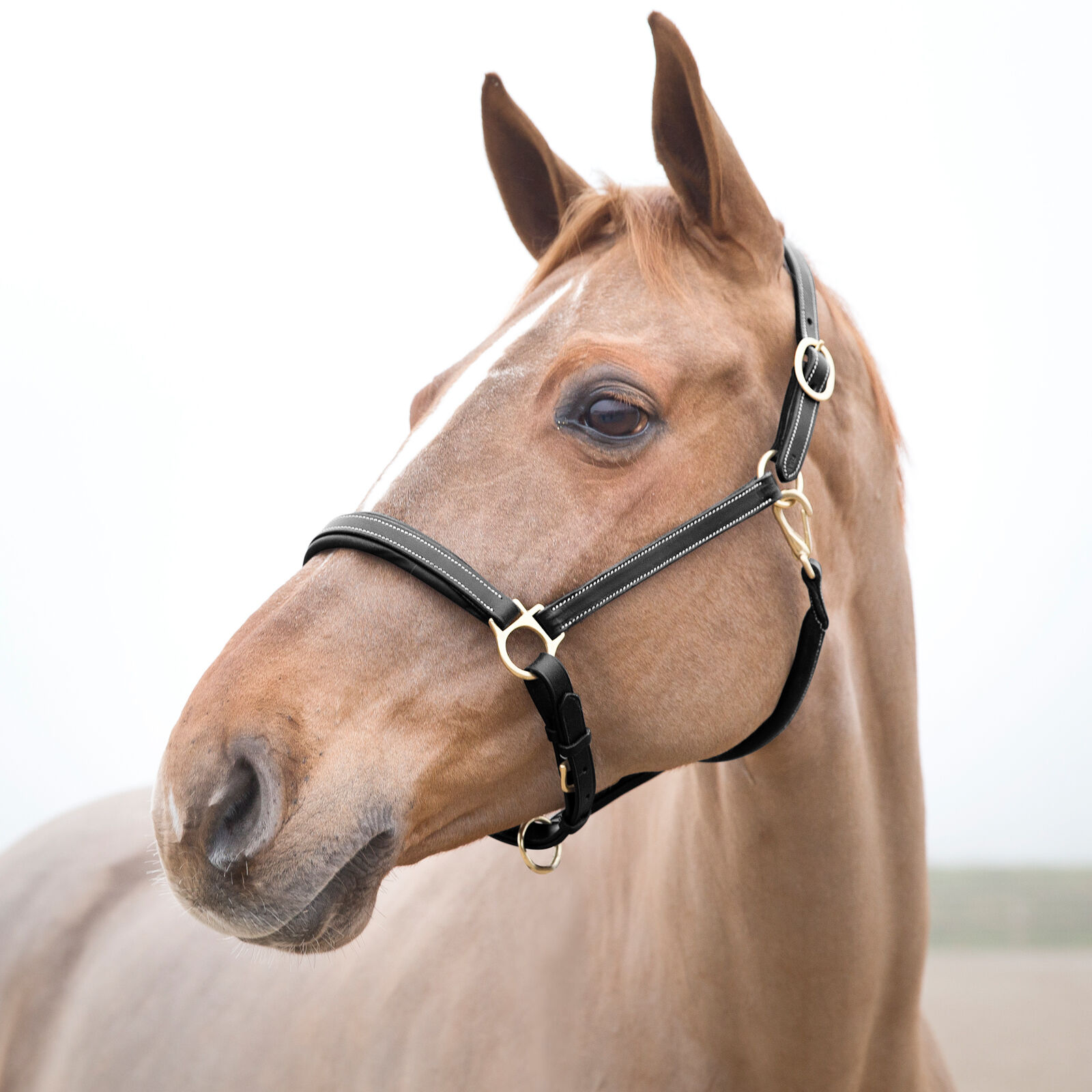 Carabiner HORSES HALTER Headcollar Supreme with Panic Hook O 2 M Various Colours